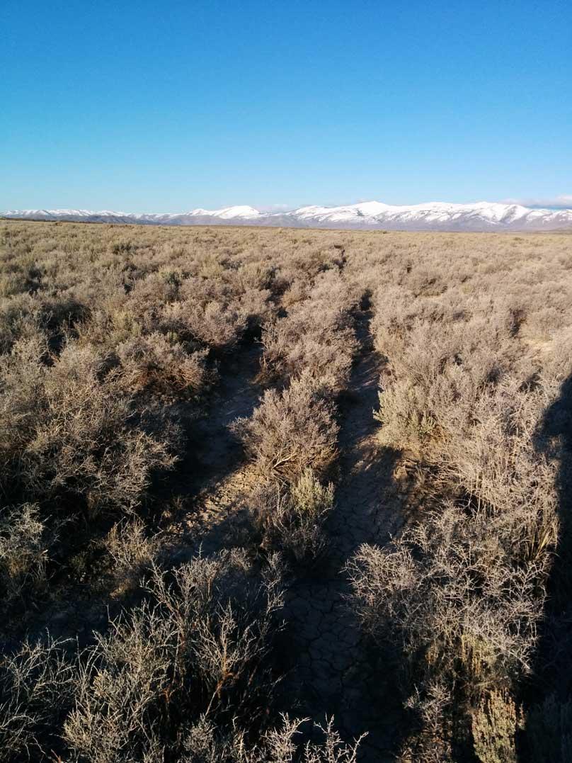 Forgotten Road Across Dove Ranch